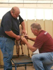 Iowa Dairy Goat Association Artificial Insemination Clinic