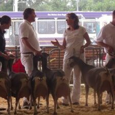 IDGA members showing at the 2016 Iowa State Fair